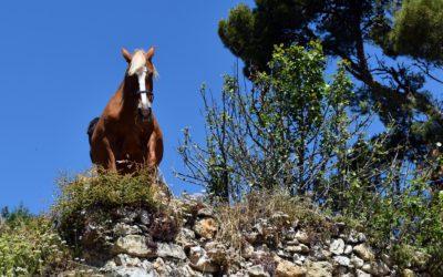 Treballs de neteja forestal als voltants de Morella