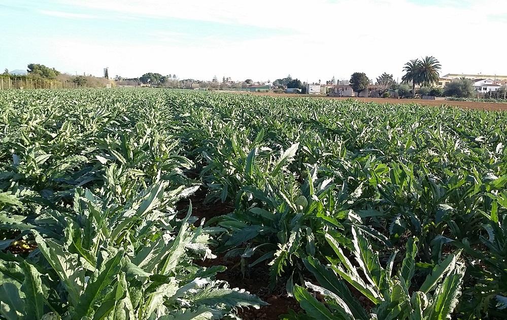 Benicarló regularà la utilització agrícola de fangs procedents de la depuració d'aigües residuals